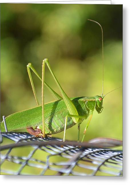 Greeting Card featuring the photograph Mr Grasshopper by Mary Zeman