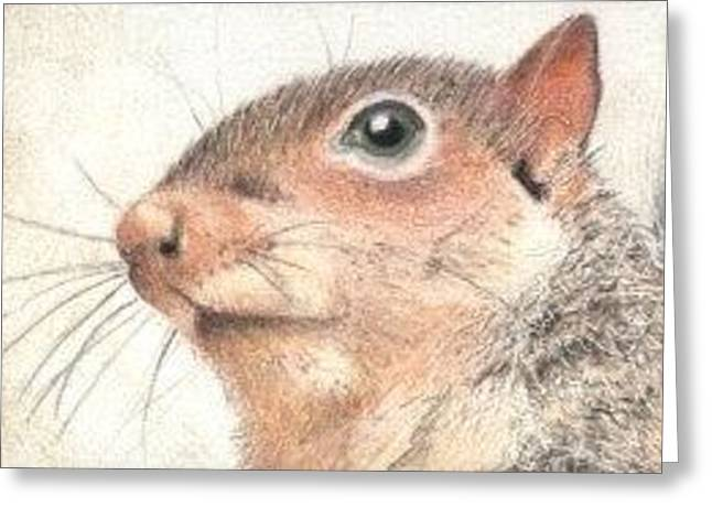 Mr. Squirrel - Aceo Greeting Card