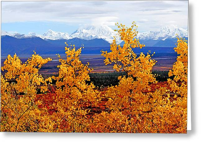 Mt. Hayes Through The Aspens Greeting Card