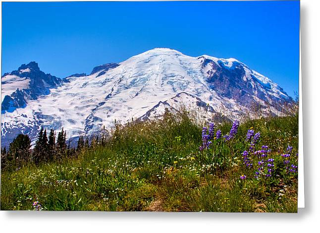 Mt Rainier Meadow With Lupine Greeting Card by David Patterson