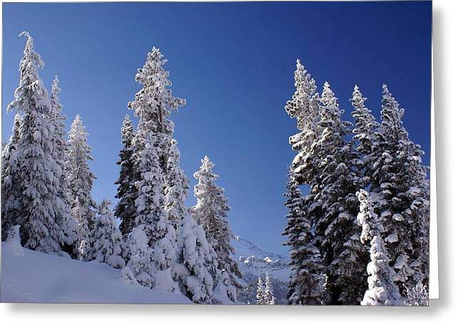 Mt. Rainier's Christmas Tree's Greeting Card