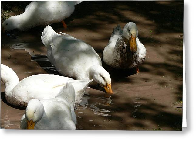 Muddy Ducks Greeting Card