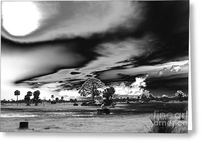 Mudjam In Black And White  Greeting Card by Don Youngclaus