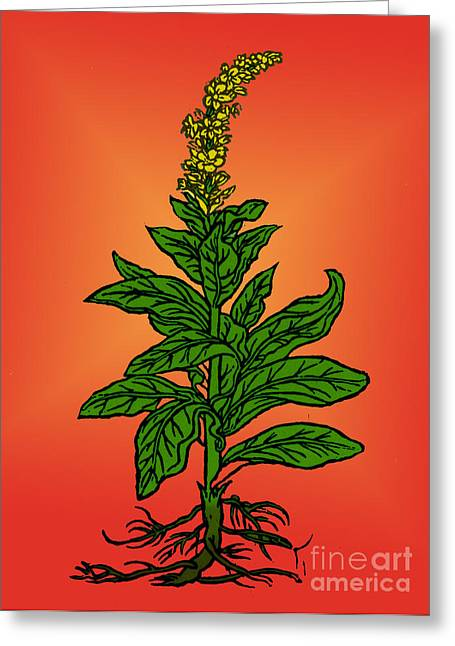 Mullein Greeting Card by Science Source