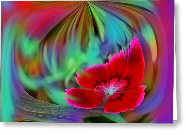 Multi Color Floral Abstract Greeting Card by Linda Phelps
