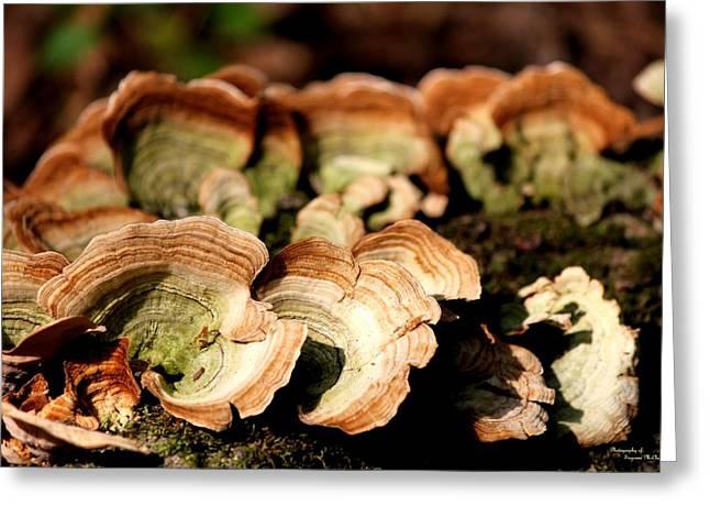 Multi Colored Gill Polypore Fungi 1555 Greeting Card