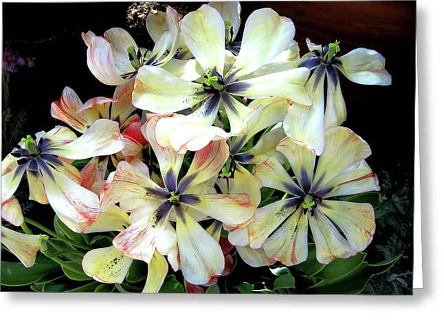 Multicolored Beauties Greeting Card by Ed Golden