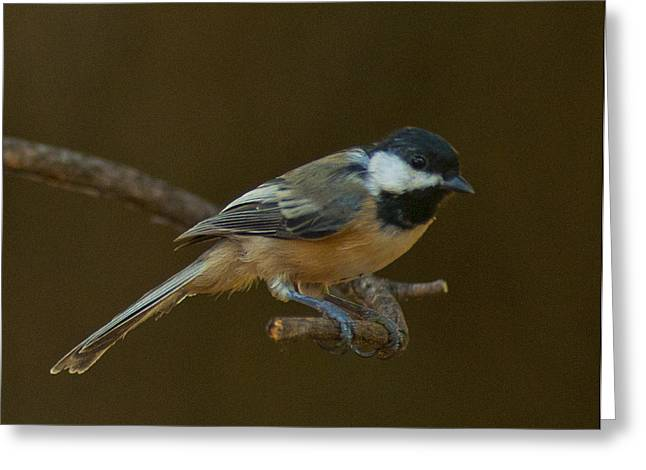 Multicolored Chickadee Greeting Card by Don Wolf