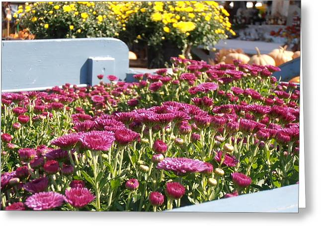 Mums At The Farm Stand Greeting Card by Kimberly Perry