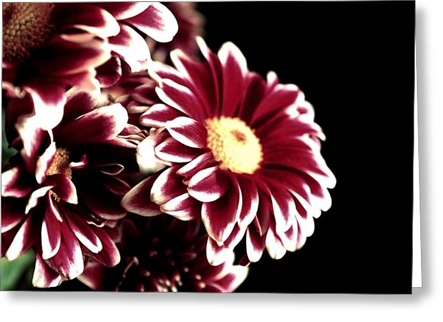 Mums In A Vase Greeting Card by Cathie Tyler