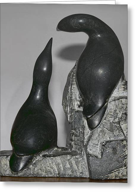 Murres Greeting Card by Gregory Scott