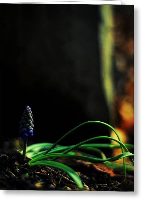 Muscari - Grape Hyacinth Greeting Card by Rebecca Sherman