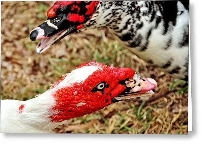 Muscovy Ducks Greeting Card
