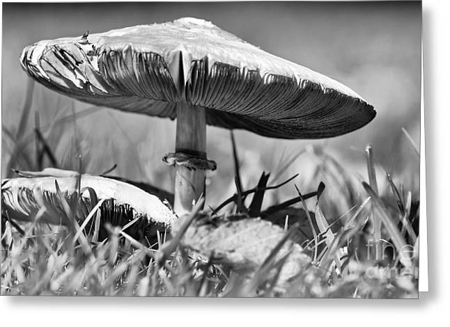 Mushroom In Black And White Greeting Card