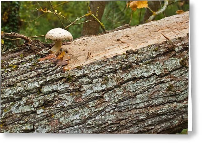 Mushroom's Tree Greeting Card by Nabucodonosor Perez