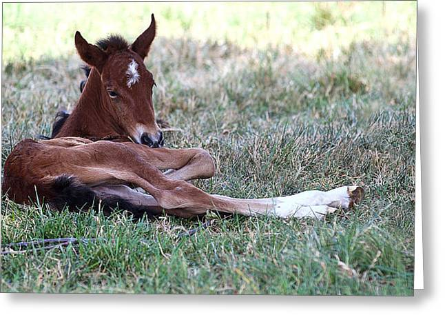 Mustang Filly Greeting Card by Elizabeth Hart