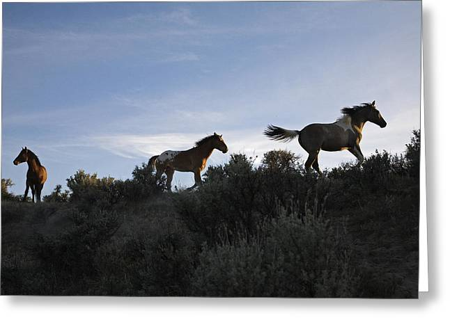 Mustangs Wander Free In The South Greeting Card by Melissa Farlow