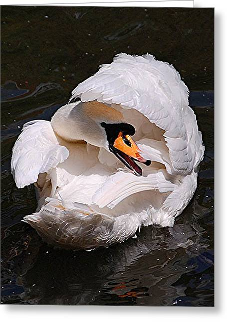 Mute Swan Greeting Card by Patricia Tapping