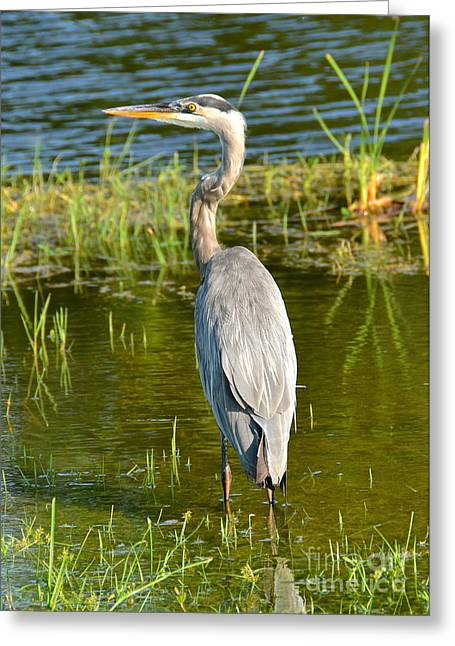 My Blue Heron II Greeting Card by Carol  Bradley