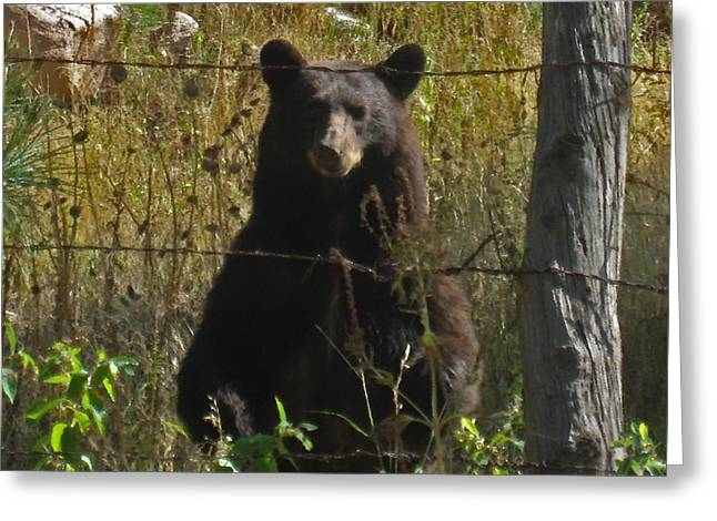 My Capture In Beulah Today Greeting Card by Tammy Sutherland