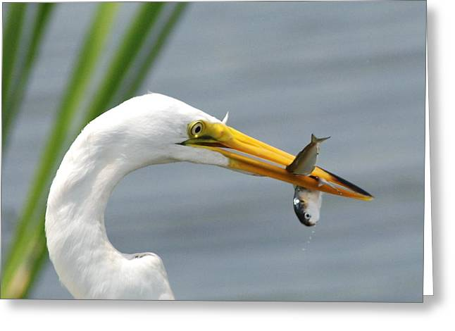 My Catch Greeting Card by Kathy Gibbons