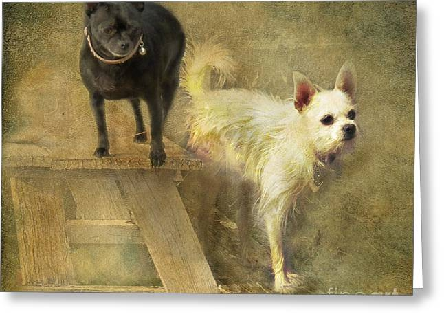 My Chihuahua Girlz  Greeting Card by Rhonda Strickland