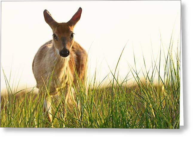 My Friend At Fire Island Greeting Card by Vicki Jauron