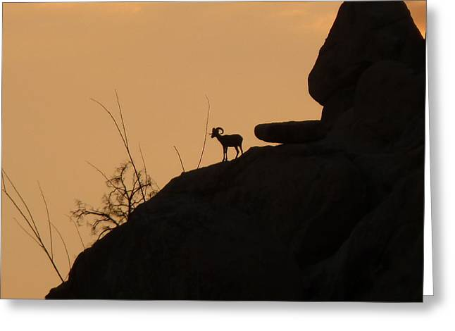 My Friend At Sunset I Greeting Card