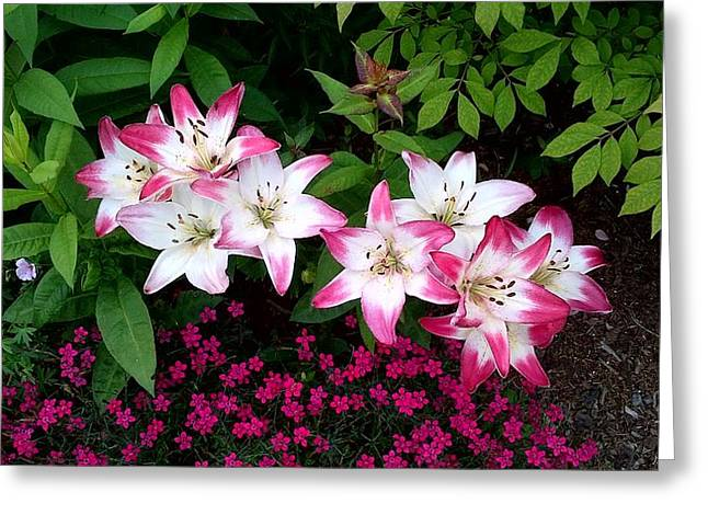 Greeting Card featuring the photograph My Lilies by Patricia Hiltz