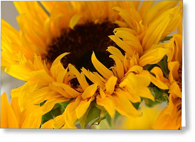 Greeting Card featuring the photograph My Little Slice Of Sunshine by Tanya Tanski
