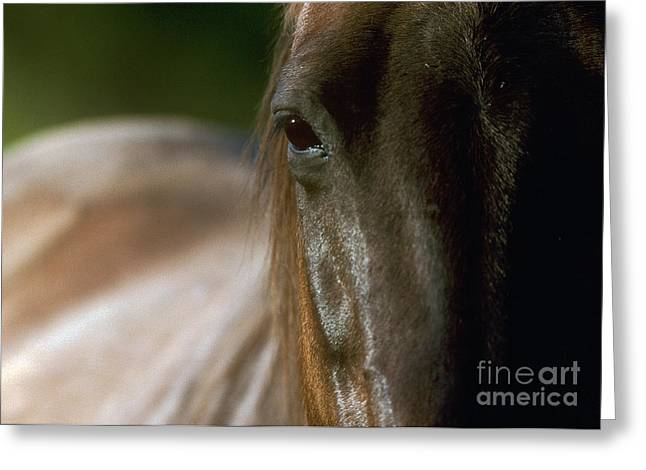Greeting Card featuring the photograph My Neigh-bor's Horse by Doug Herr