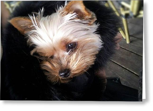 My #princess #dog #yorkie Greeting Card