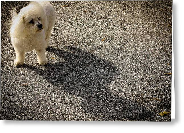 Greeting Card featuring the photograph My Shadow by Patrice Zinck