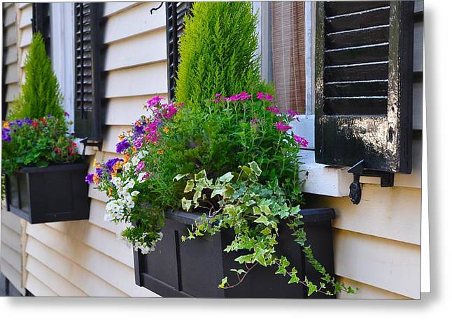 My Tradd Street Window Boxes Greeting Card by Lori Kesten