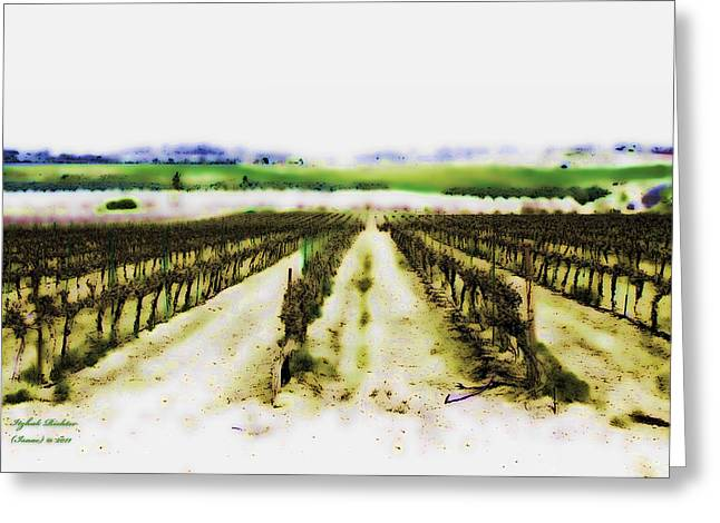 My Well-beloved Had A Vineyard Greeting Card by Itzhak Richter