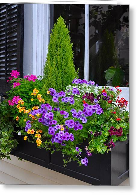 My Window Boxes Late May Greeting Card by Lori Kesten