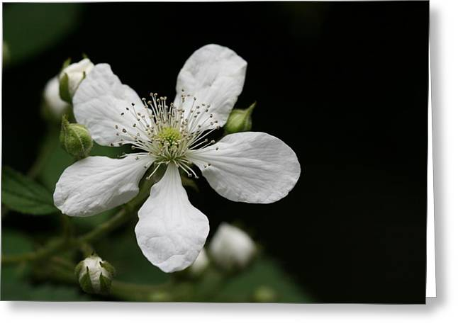 Mysterious Pretty White Flower Greeting Card by Bonnie Boden
