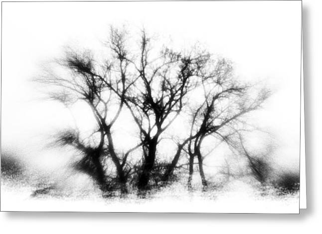 Mysterious Trees Greeting Card by David Ridley