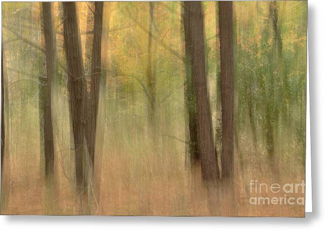 Mystery Woods Greeting Card by Tamera James