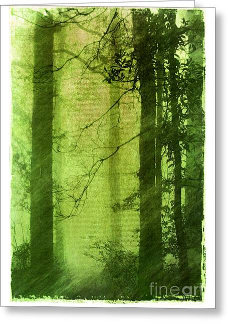 Mystical Glade Greeting Card by Judi Bagwell