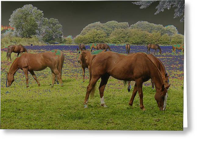 Mystical Horses Greeting Card by Fred Whalley