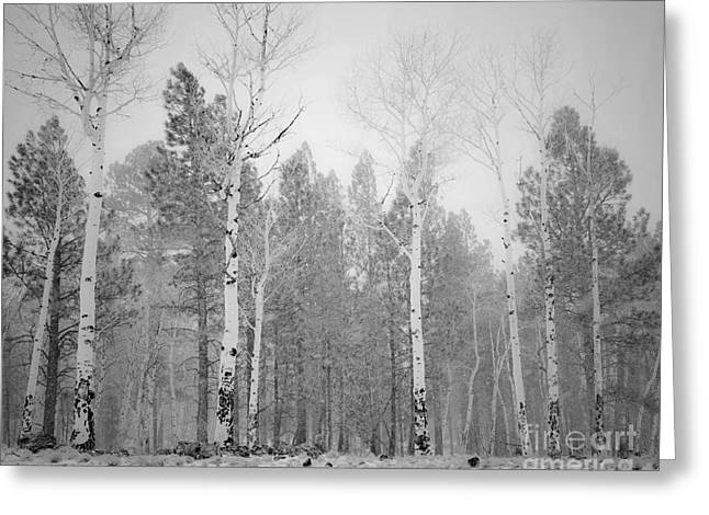 Naked Aspens In Snow Squall Greeting Card by Arne Hansen