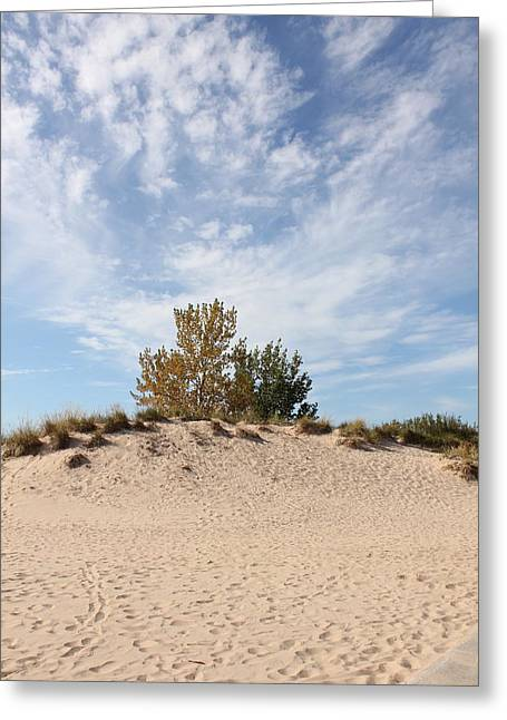 Nantucket Greeting Card by Sheryl Burns