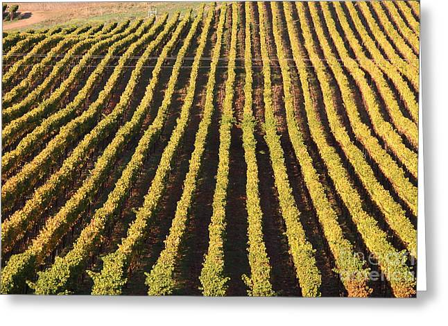 Napa Valley Vineyard . 7d9061 Greeting Card by Wingsdomain Art and Photography