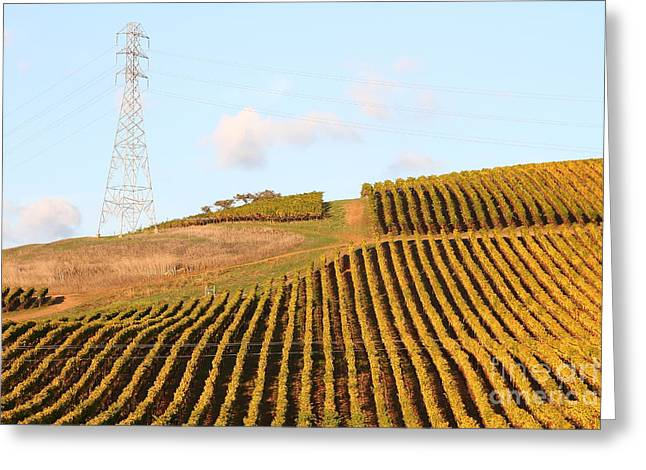Napa Valley Vineyard . 7d9066 Greeting Card by Wingsdomain Art and Photography