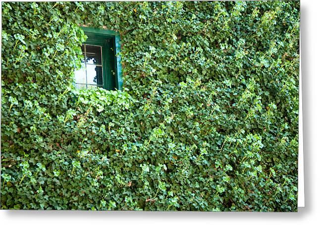 Napa Wine Cellar Window Greeting Card
