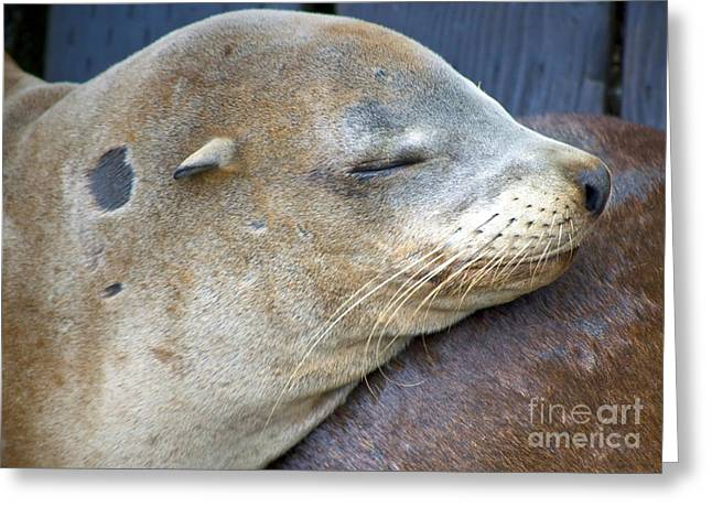 Napping Greeting Card by Gwyn Newcombe