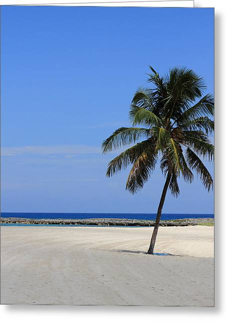 Greeting Card featuring the photograph Nassau Palm by Coby Cooper