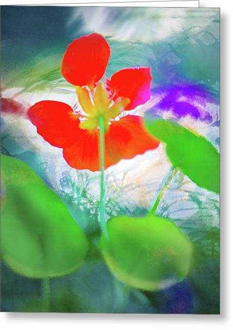 Greeting Card featuring the photograph Nasturtium by Richard Piper