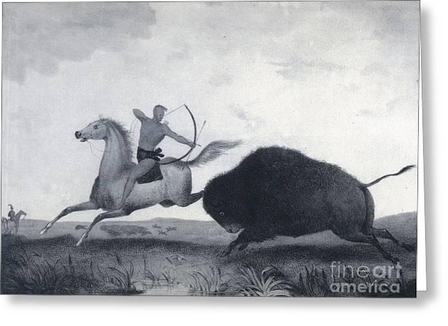 Native American Indian Buffalo Hunting Greeting Card